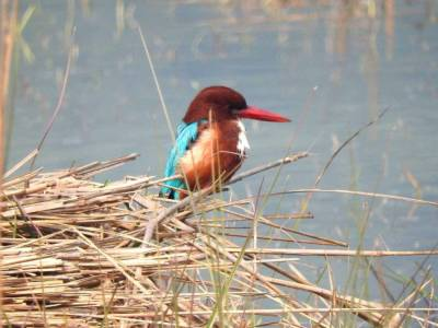 Sultanpur Bird Sanctuary Gurugram