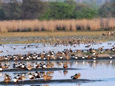 Sultanpur Bird Sanctuary Haryana