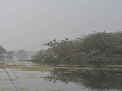 Sultanpur National Park Bird Sanctuary