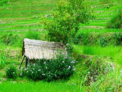 Khonoma Nagaland