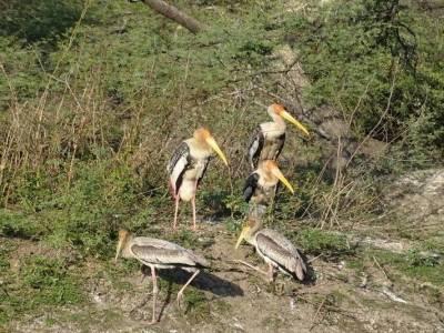 Bharatpur Bird Sanctuary Rajasthan