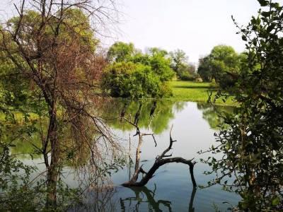 Bharatpur Bird Sanctuary or Keoladeo National Park in Rajasthan