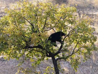 Ranthambore National Park In Rajasthan