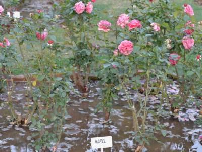 Rose Garden in Chandigarh of India