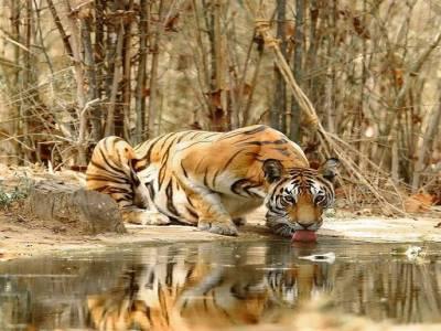 Koyna Wildlife Sanctuary Satara Maharashtra