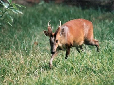 Koyna Wildlife Sanctuary Maharashtra