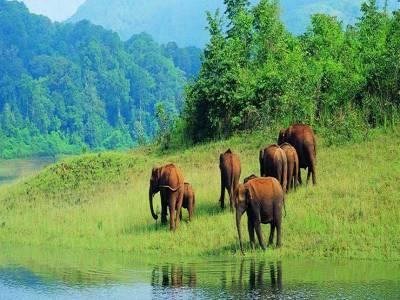 Koyna Wildlife Sanctuary in Satara of Maharashtra, India