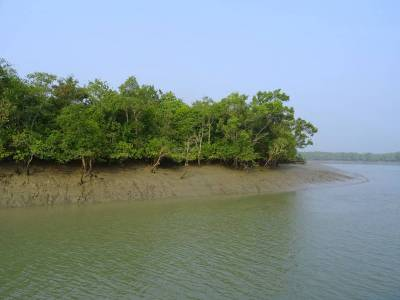 Sunderban National Park in West Bengal