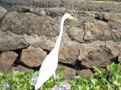 Kumarakom Bird Sanctuary Kottayam