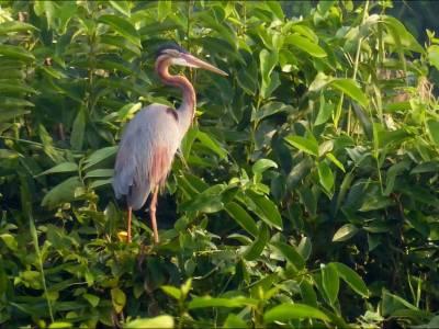 Kumarakom Bird Sanctuary  Kerala