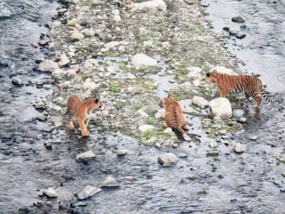 Rajaji National Park Uttarakhand