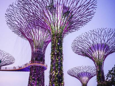 Supertree, Singapore