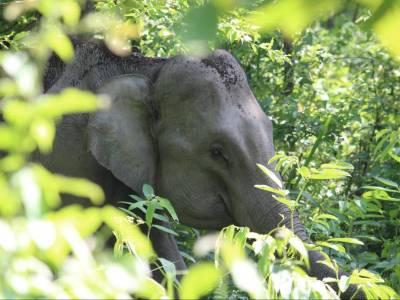 Manas National Park Assam