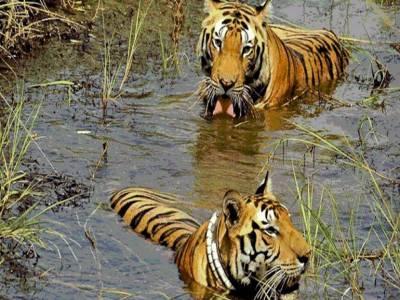 Manas Wildlife Sanctuary Assam